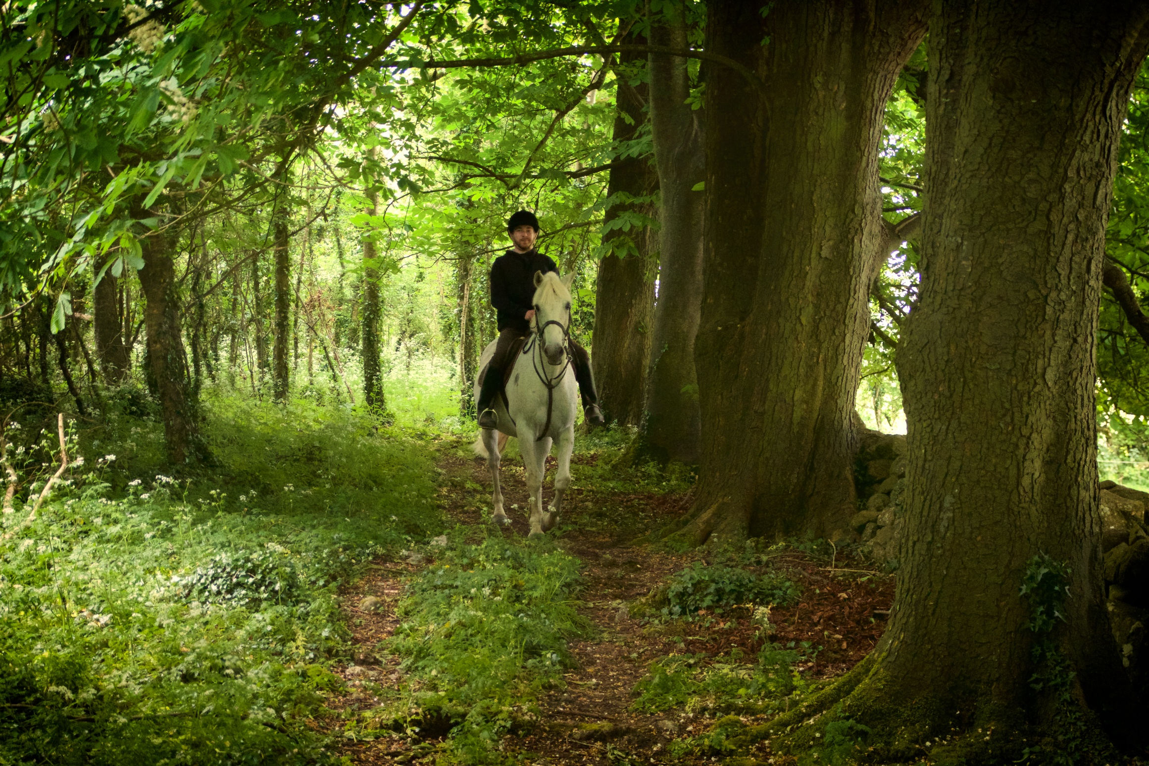 Woodland horse riding trekking Ireland